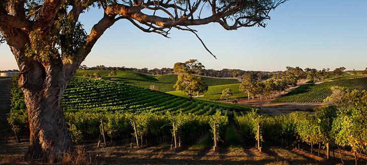 Vina iz Australije